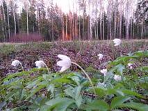 De bloemen in zonsondergang stock fotografie