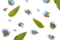 De bloemenachtergrond met een lege ruimte voor een vlakke tekst, legt Royalty-vrije Stock Fotografie