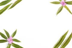 De bloemenachtergrond met een lege ruimte voor een vlakke tekst, legt Stock Foto's