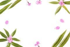 De bloemenachtergrond met een lege ruimte voor een vlakke tekst, legt Royalty-vrije Stock Foto's