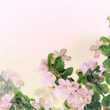 De bloemenachtergrond van Apple royalty-vrije stock afbeeldingen