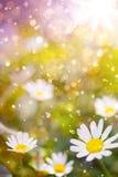 De bloemenachtergrond van Art Beautiful Stock Foto