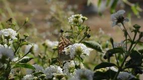 De bloemenachtergrond van de bloem Garden stock footage