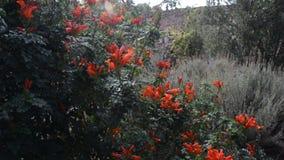 De bloemenachtergrond van de bloem Garden stock video
