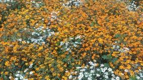 De bloemenachtergrond van de bloem Garden Royalty-vrije Stock Foto's