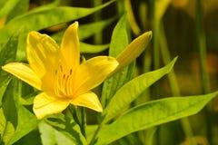De bloemenachtergrond van de bloem Garden Stock Afbeeldingen
