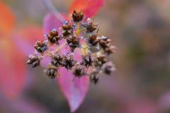 De bloemenachtergrond van de herfst Stock Afbeelding