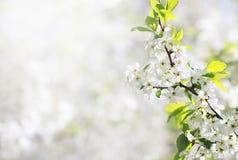 De bloemenachtergrond van de lente Stock Foto