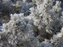 De achtergrond van de winterbloemen Royalty-vrije Stock Fotografie