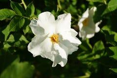 De bloemenachtergrond van de zomer royalty-vrije stock foto's