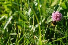 De bloemenachtergrond van de zomer stock foto