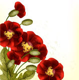De bloemenachtergrond van Grunge met rode poppyes Stock Foto