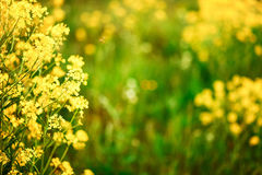 De bloemenachtergronden Stock Afbeelding