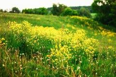 De bloemenachtergronden Stock Foto's