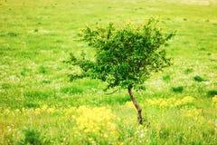 De bloemenachtergronden Royalty-vrije Stock Foto