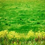 De bloemenachtergronden Stock Afbeeldingen