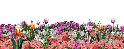 De bloemenbanner van het tuinweb royalty-vrije illustratie