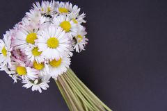 De bloemenboeket van Daisy Stock Afbeelding