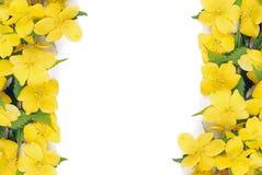 De bloemengrens van de forsythia Stock Afbeelding