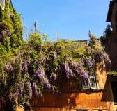 De bloemenlente Royalty-vrije Stock Foto's