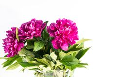 De bloemenpioenen zijn op de lijst royalty-vrije stock foto's