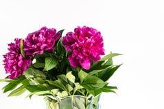 De bloemenpioenen zijn op de lijst stock foto