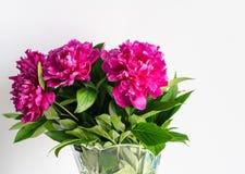 De bloemenpioenen zijn op de lijst royalty-vrije stock afbeeldingen