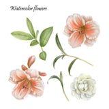 De bloemenreeks van lelie, nam en bladeren toe Royalty-vrije Stock Fotografie