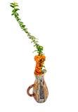 De bloemenregeling van de daling Stock Afbeelding