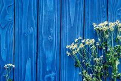 De bloemensamenstelling met kamille op blauwe houten vlakte als achtergrond legt model Stock Foto