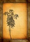 De bloementextuur van Grunge Stock Foto