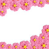 De bloemframe van het document Stock Foto's