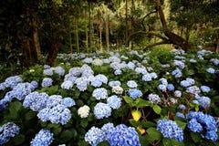 De bloemgebied van de lente in bloei Stock Foto's
