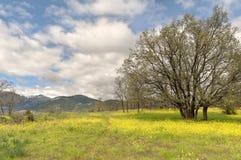 De bloemgebied van de lente en blauwe hemel Stock Foto's