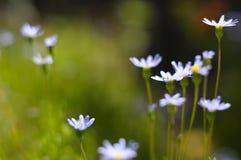 De bloemgebied van de zomer Stock Afbeeldingen