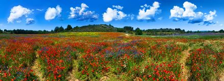 De bloemgebied van de zomer in Frankrijk Stock Foto's