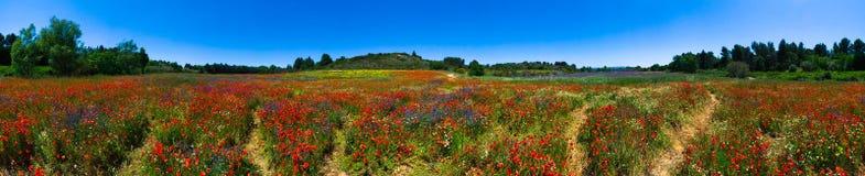 De bloemgebied van de zomer in Frankrijk Royalty-vrije Stock Afbeeldingen