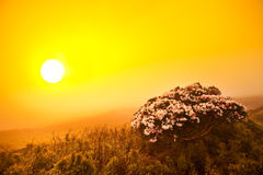 De bloemgebied van de zonsondergang Stock Foto's