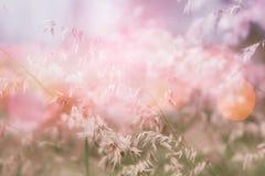 De bloemgebied van het aardgras in zachte nadruk, roze pastelkleurachtergrond Stock Foto