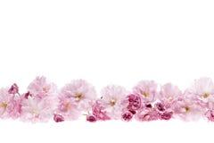 De bloemgrens van kersenbloesems stock afbeeldingen
