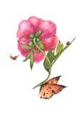 De bloemillustratie van de waterverfpioen Stock Foto