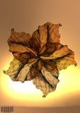 De bloemillustratie van het blad Stock Foto's