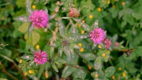 De bloemklaver van landschapsbloemen stock afbeeldingen