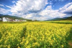 De bloemlandschap van Wuyuancanola Royalty-vrije Stock Afbeeldingen
