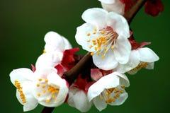 De bloemlente Royalty-vrije Stock Foto