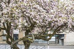 De de bloemlente van de bloemgrijns Stad Royalty-vrije Stock Fotografie