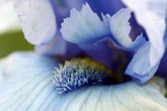 De bloemmacro van de iris stock foto