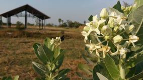 De bloemnectar, insecten is de te bewandelen weg Stock Foto