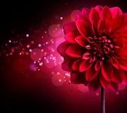 De bloemontwerp van de dahlia Stock Afbeeldingen