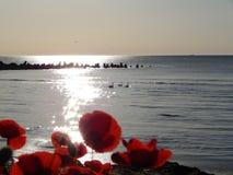 De bloempapaver op het strand stock foto
